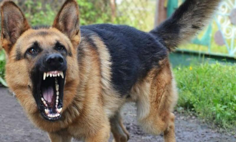 energetik 20170606 - В России появится перечень «потенциально опасных пород собак» и особые правила их содержания